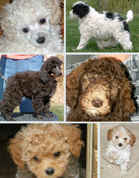 Puppy Gallery 1