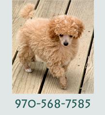 Call 970-568-7585