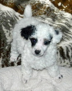 Ziva as a puppy