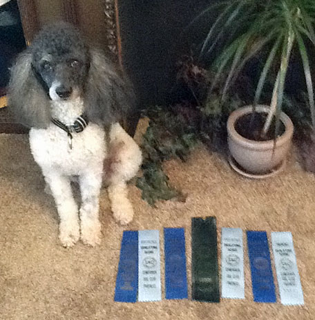 FALL 2014 UPDATE: Boo got his Novice Title at his first UKC trial with 3 first places