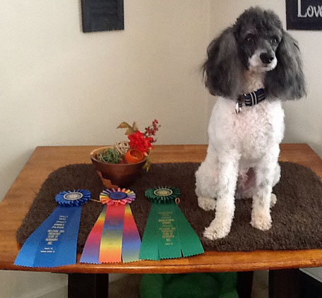 Fall 2014 UPDATE: Boo got his last Rally leg and Rally Excellent Title this week with a first place!