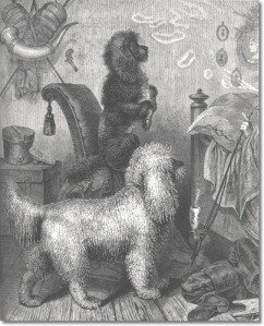german-poodles-1881