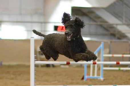 joey-jumping1