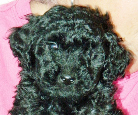 Bria as a tiny pup