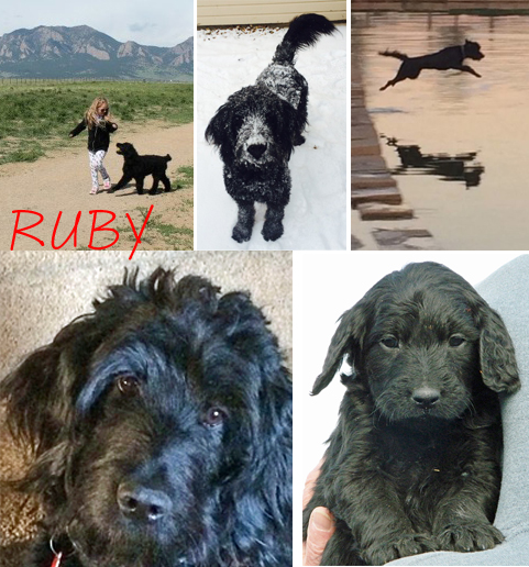 Ruby shown currently and as a pup