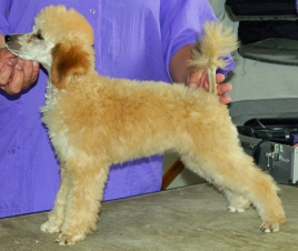 Powder Valley Rowdy's Ritzy Rebel at just 4 months