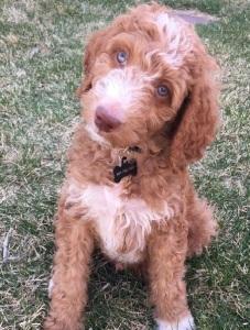 leon the pup