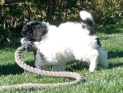 Angel Plays with Rope