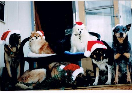 Christmas Dogs 1994