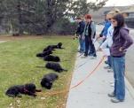 Goldendoodles in Class BestDSCN2519 (2)