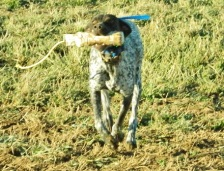 benelli-retrieves-2